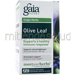 Single Herbs - Olive Leaf 60 caps GAIA HERBS